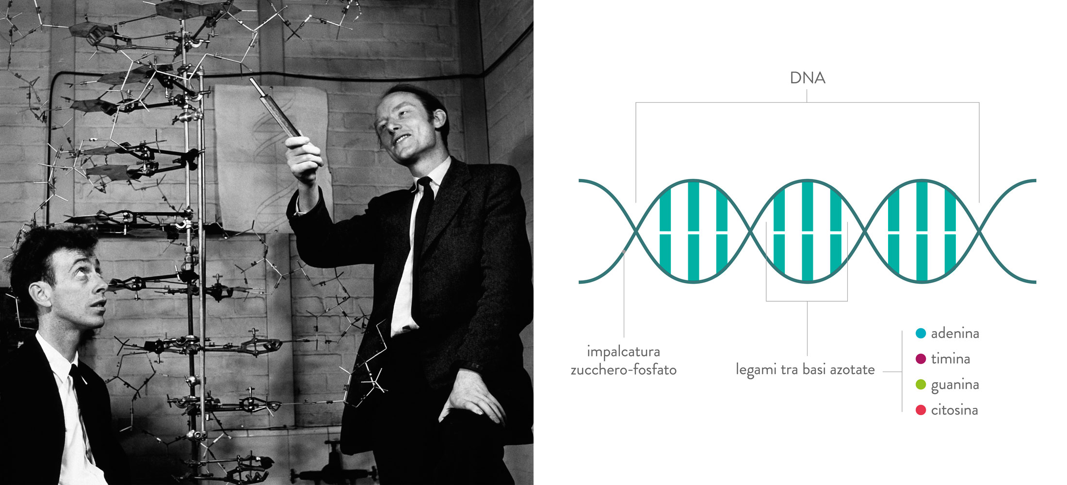 DNA AND - Crick & Watson, schema DNA